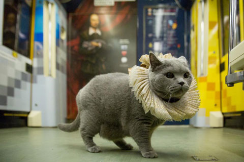 Shakespeare-traincat-8