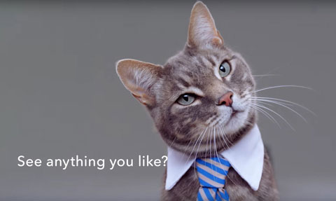 bad-yet-hillarious-cat-commercials-released-by-vw-honda-and-buick-110212_1.jpg