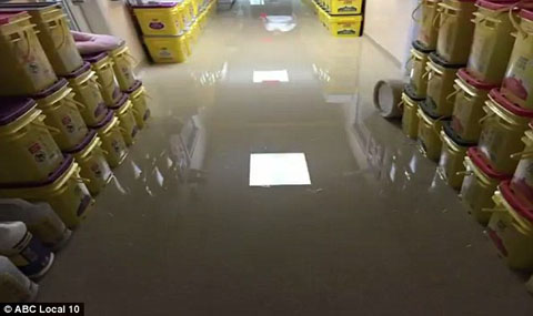 35CC387600000578-0-The_Florida_Humane_Society_in_Pompano_Beach_was_completely_flood-a-70_1467230035258