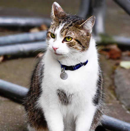 PAY-Palmerston-the-Foreign-office-cat-blackwhite-and-Larry-the-No10-cat-ongoing-fight-this-morning