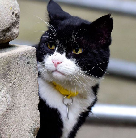 PAY-Palmerston-the-Foreign-office-cat-blackwhite-and-Larry-the-No10-cat-ongoing-fight-this-morning-1