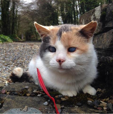 stevietheblindcat
