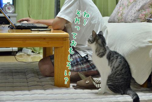 DSC_6210_2.jpg