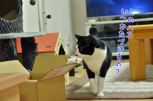 DSC_6217_2.jpg