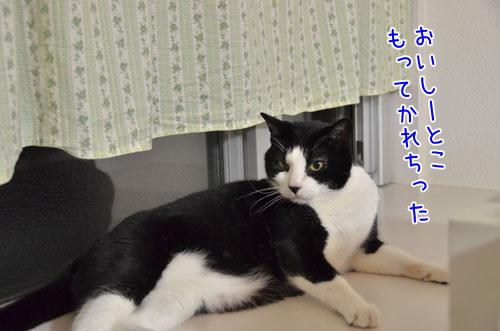 DSC_6320_2.jpg