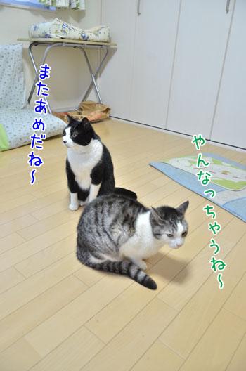 DSC_6488_2.jpg