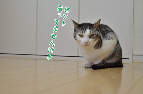 DSC_6522_2.jpg
