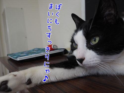 P5100033_2.jpg