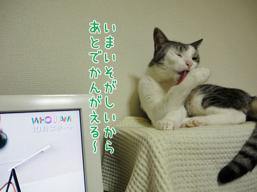 P7060007_2.jpg