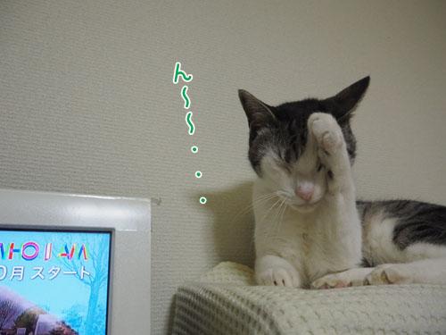 P7060014_2.jpg