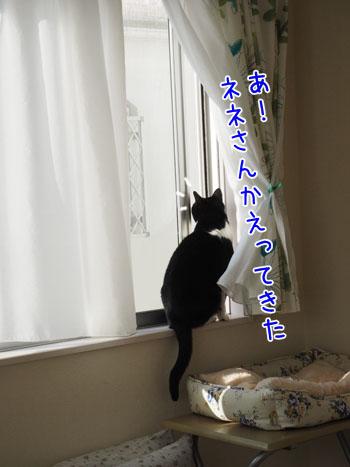 PA120008_2.jpg