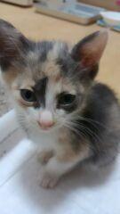 無責任な飼い主さんより保護された子猫