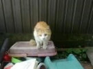 骨折している猫。(涙)