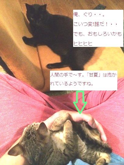 「ぐり」と「甘夏」