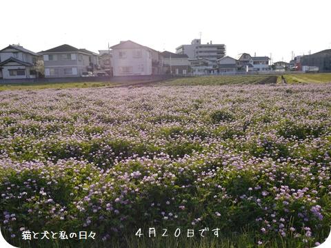 20160501-001.jpg