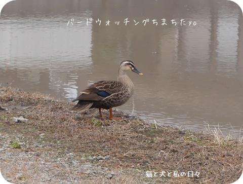 20160608-002.jpg