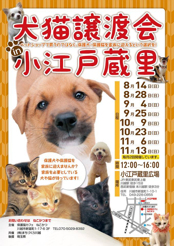 9-11犬猫譲渡会