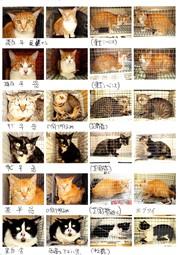 地域猫2img022