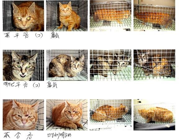 地域猫2img025