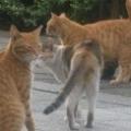 3cats50b.jpg