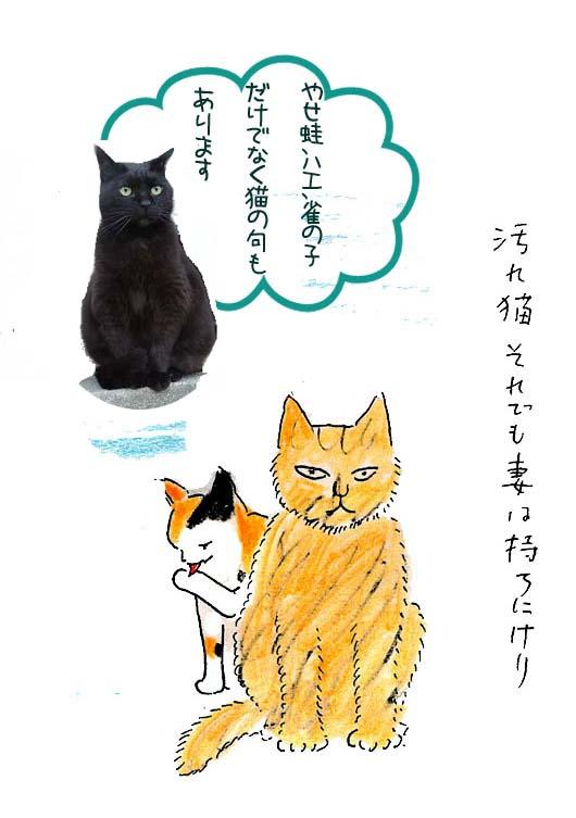 一茶と猫1汚れ猫