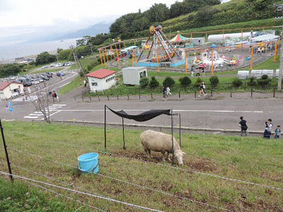 ①働いている羊DSCN0250