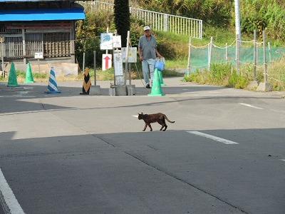 ⑫猫悠々DSCN0127