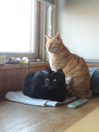 猫スタッフDSCN0785