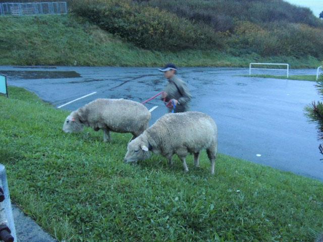 水族館の羊DSCN0895
