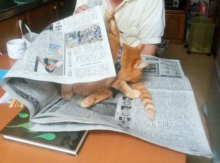 新聞つぶし