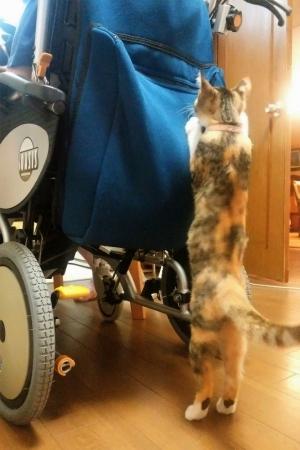 車椅子が好き