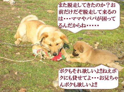 DSCN0412_convert_20160629094039.jpg