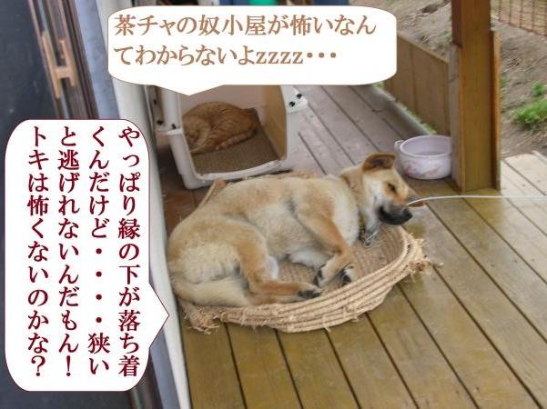 DSCN0423_convert_20160629094122.jpg