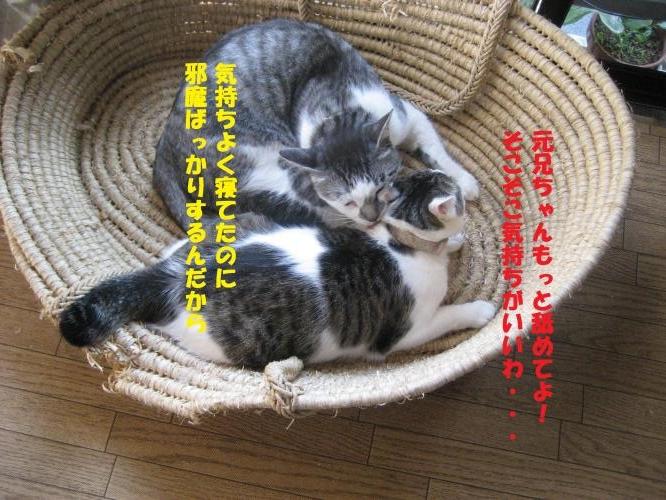 IMG_2618_convert_20160813103015.jpg
