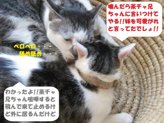 IMG_2620_convert_20160813103141.jpg