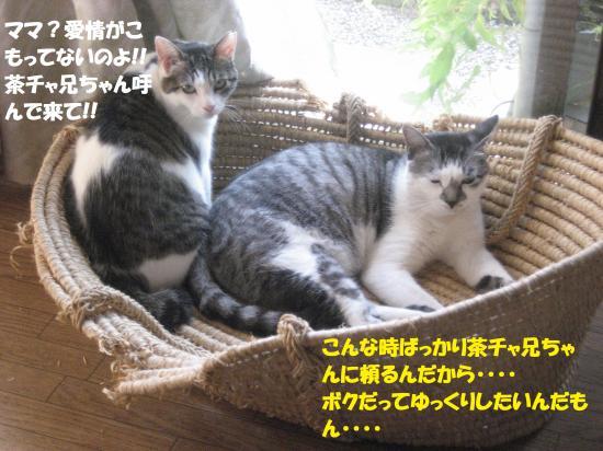 IMG_2622_convert_20160813103245.jpg