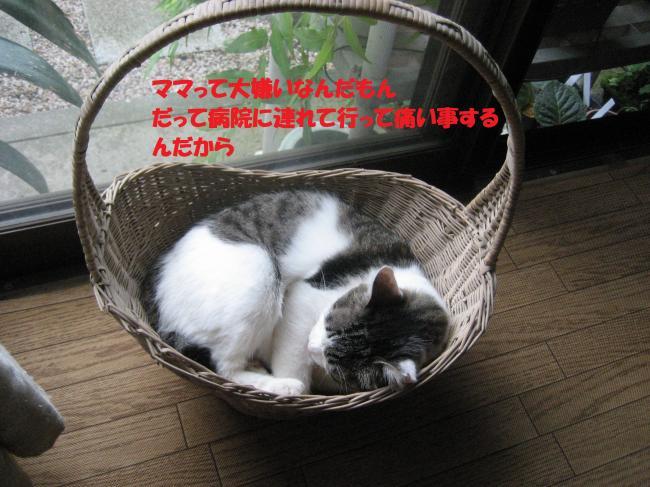IMG_2682_convert_20160824090413.jpg