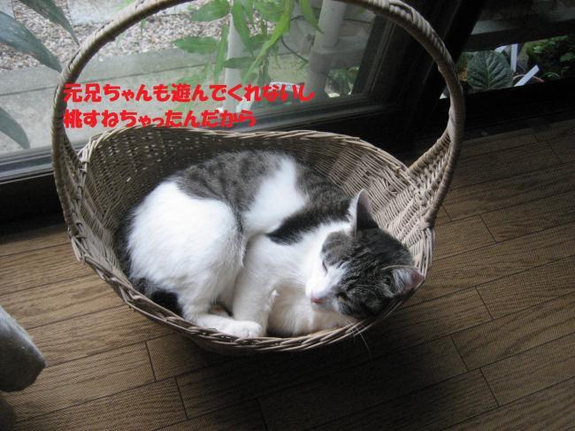 IMG_2683_convert_20160824090431.jpg