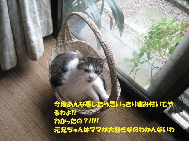 IMG_2687_convert_20160824090600.jpg