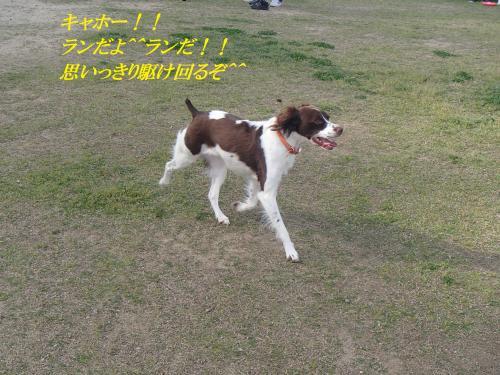 P4240059_convert_20160425135800.jpg