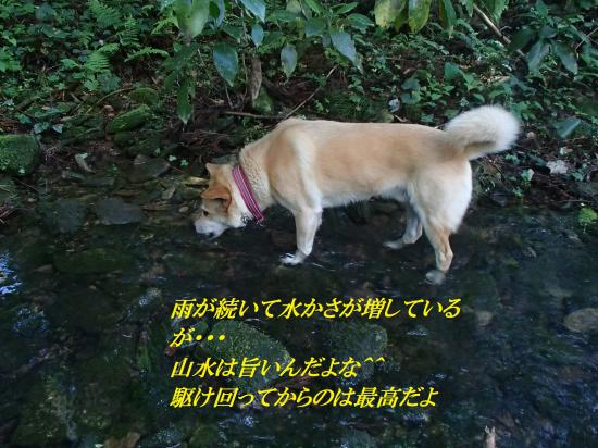 P4290093_convert_20160430093810.jpg