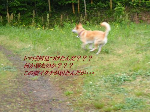 P5060156_convert_20160507093258.jpg