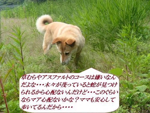 P5250389_convert_20160528093500.jpg
