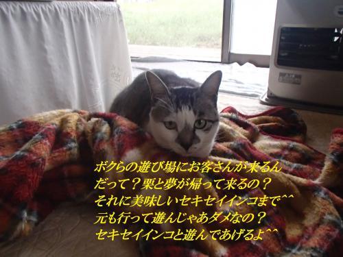 P5290418_convert_20160603071133.jpg
