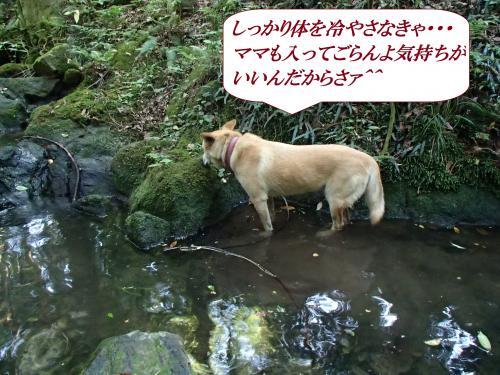 P6020457_convert_20160604090309.jpg
