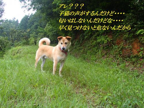P6240662_convert_20160630093629.jpg
