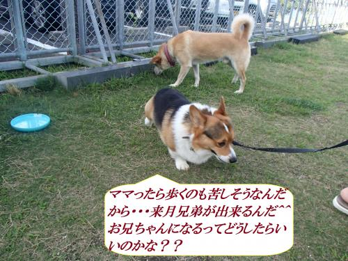 P7030768_convert_20160704092836.jpg