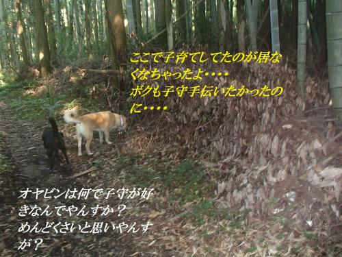 P7060805_convert_20160707095336.jpg