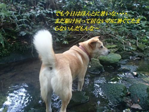 P7060811_convert_20160707095541.jpg