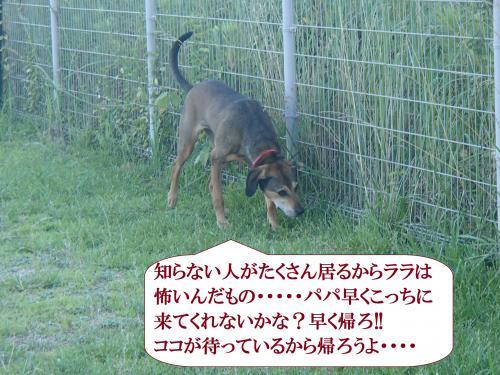 P7090851_convert_20160710093942.jpg